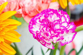 Beautiful flower from the garden in thailand — Stock Photo