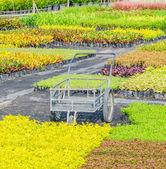 Garden cart — Stock Photo