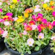 Colorful flowers — Stock Photo #34825649