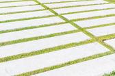 Concrete walk pattern — Stock Photo