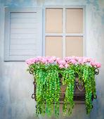 Vieilles fenêtres — Photo