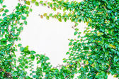 Leaf frame — Stock Photo