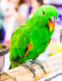 Parrot macaw bird — Stock Photo