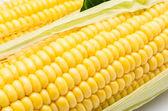 Close up corn — Stock Photo