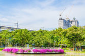 Beautiful green park — Stockfoto
