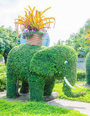 Elephant tree — Stock Photo