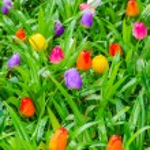 Fake tulips — Stock Photo