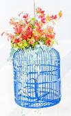 Bird cage flower — Stock Photo