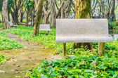 Bench in the park — Stockfoto
