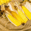 Yellow corn — Stock Photo #39496999