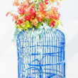 Stock Photo: Bird cage flower