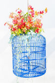 Bird cage flower — Stock Photo