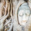 Buddha head statue — Foto Stock #39913699