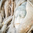 Buddha head statue — Foto Stock #39913923