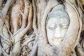 Buddha head statue — Stockfoto