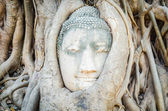 Buddha head statue — Foto Stock