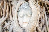 Buddha head statue — Stock Photo