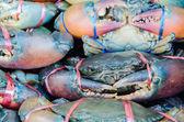 Frische krabben — Stockfoto