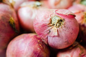 Shallots close up — Stock Photo