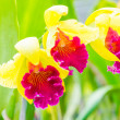 Orchids — Stock Photo #40744045