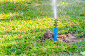 Sprinkler head watering in the garden — Stock Photo