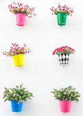Plastic flowers — Stock Photo