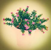 Fake flower — Stock Photo