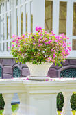 Bougainvillea flowers in vase — Stock Photo