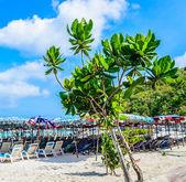 Ilha de koh larn, praia tropical — Foto Stock