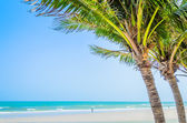 Coconut tree on the beach — Стоковое фото