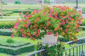 Flowers in vase — Stockfoto