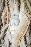 Buddha head statue — Stock Photo