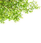 Leaf backgrounds — Stock Photo