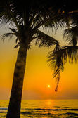 Silhouette palm sunset — Stock Photo