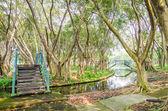 Parco della foresta — Foto Stock