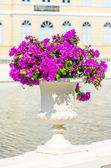 Bougainvillea flower in vase — Stock Photo