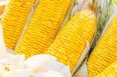 Corn closeup — Stock Photo