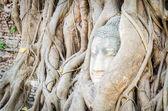 Buddha head statue under root tree in ayutthaya Thailand — Stock Photo
