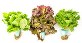 Legumes isolados no fundo branco — Foto Stock