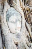 Hlava budhy pod kořenový strom v ayutthaya thajsko — Stock fotografie
