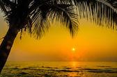 Kontur-Palm-Sonnenuntergang — Stockfoto