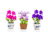 Orchidee — Foto Stock