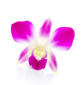Purple orchid flower isolated white background — Foto de Stock
