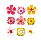 бумажный цветок — Стоковое фото