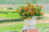 Flower vase decoration — ストック写真