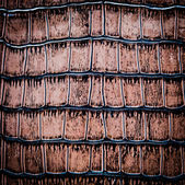 Snake leather — Stock Photo