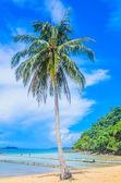 热带海洋 — 图库照片