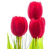 Tulips flower — Stock Photo