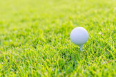 Golfový míček na zelené trávě — Stock fotografie