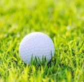 Golf ball on green grass — Stock Photo